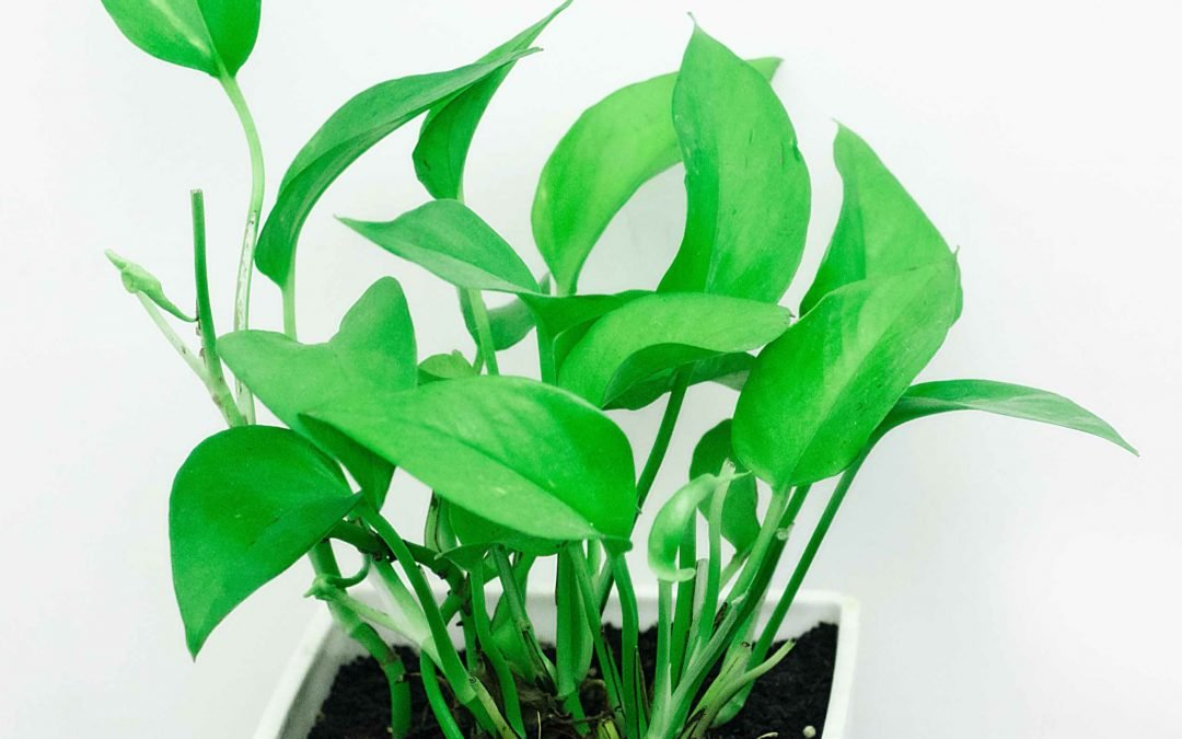 Super Houseplants that Help Keep You Healthy