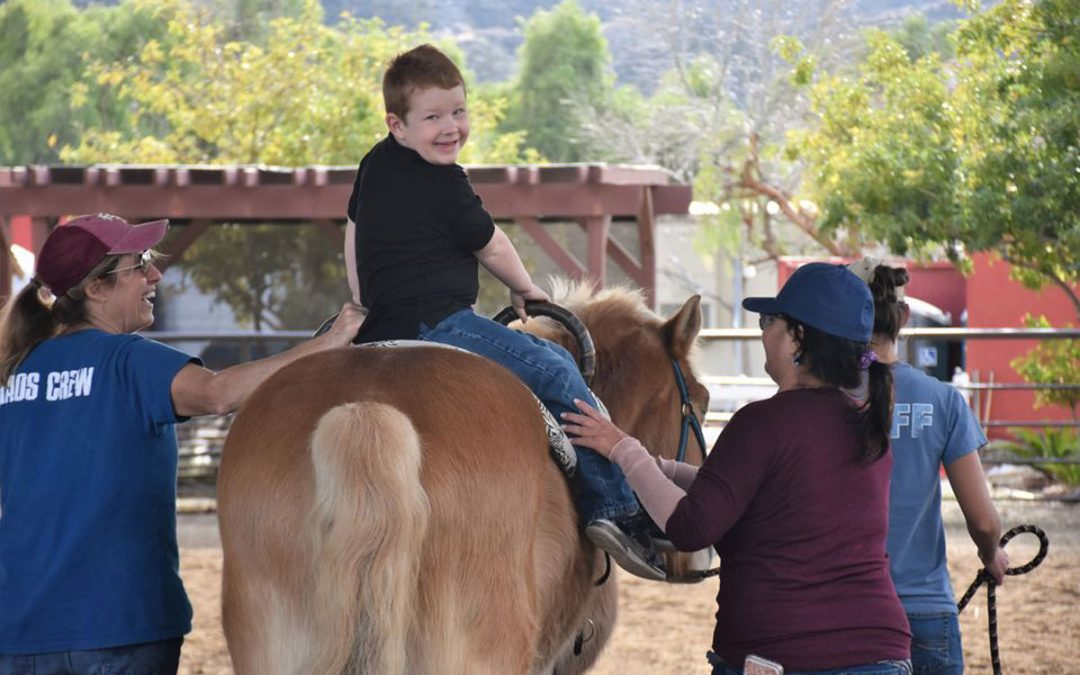 Carousel Ranch: Where Therapy is Disguised as Fun!